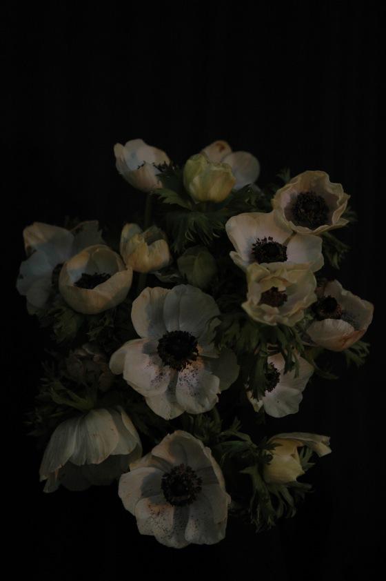 anemone_13 white