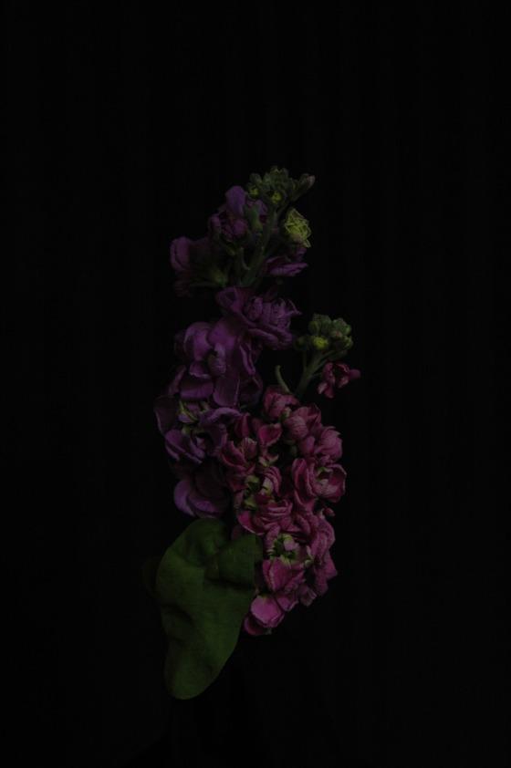 stock brompton_13 purple