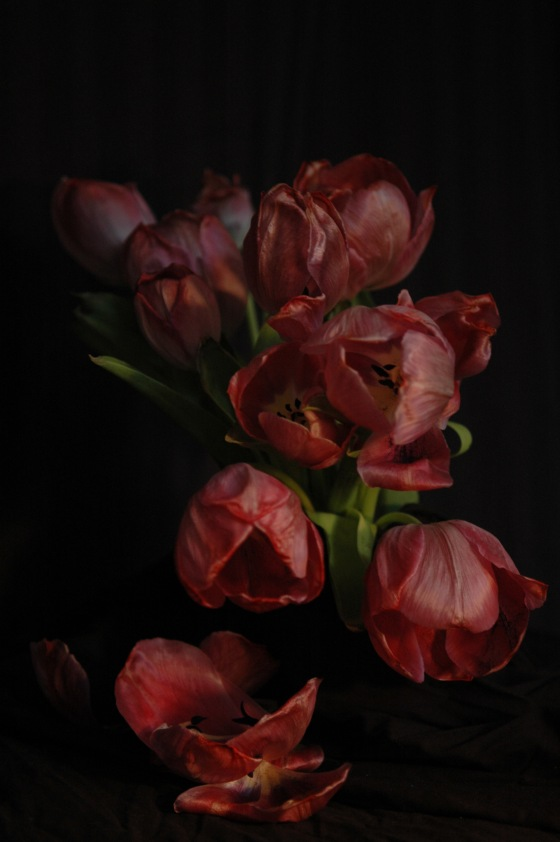 tulips_12 red