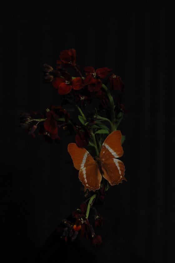 wallflower_13 maroon