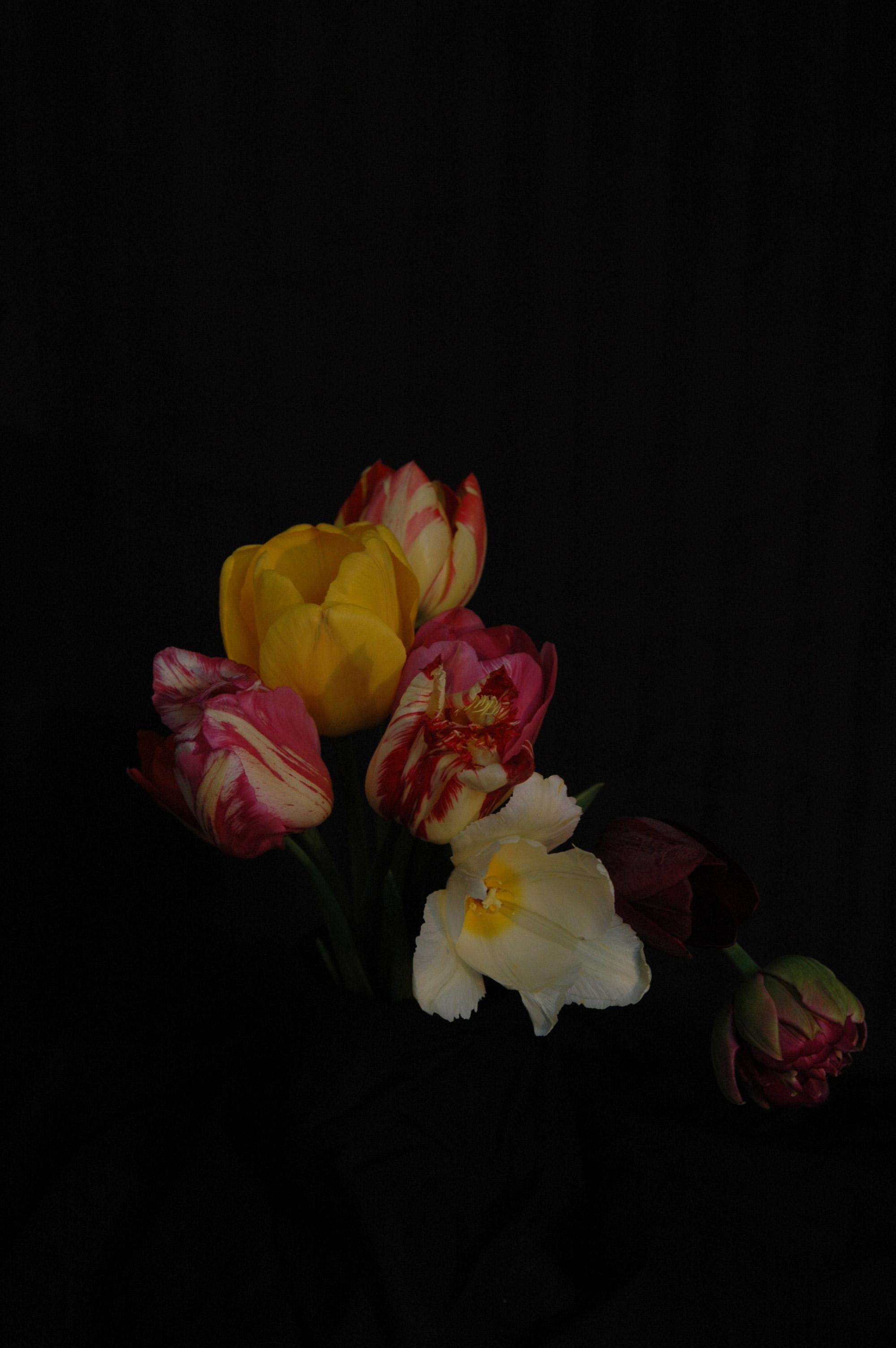 tulips_13 helter-skelter